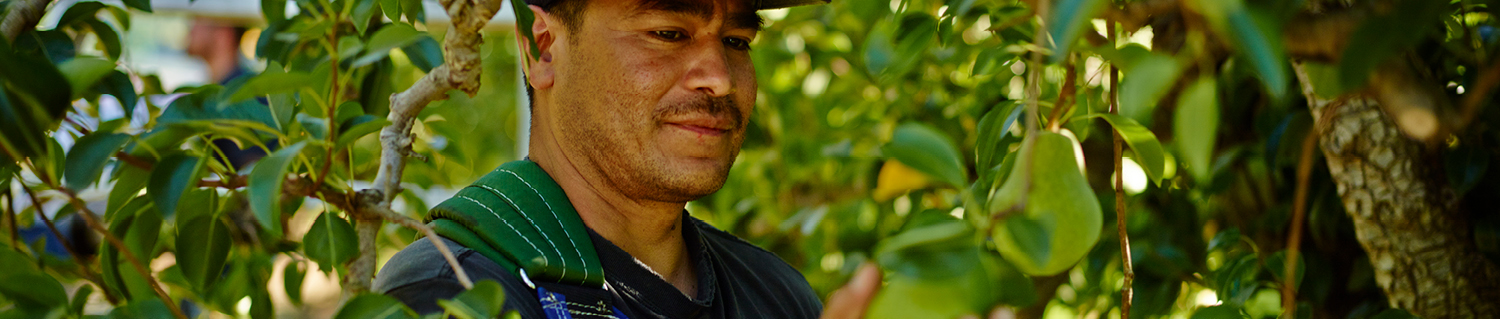 Protected: Mexico Fresh Pear Category Report