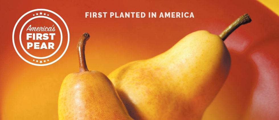 America's First Pear