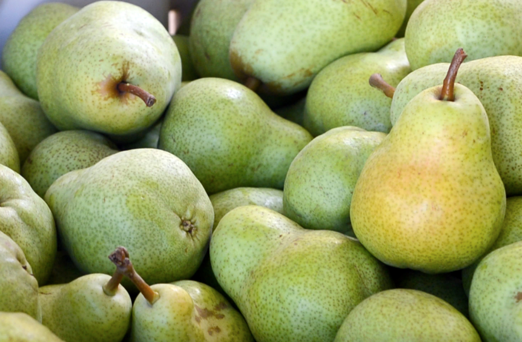 California Pear Advisory Board Wins Wide Support Among Pear Producers