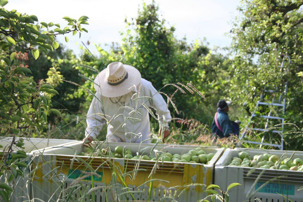 harveststarts2015-067