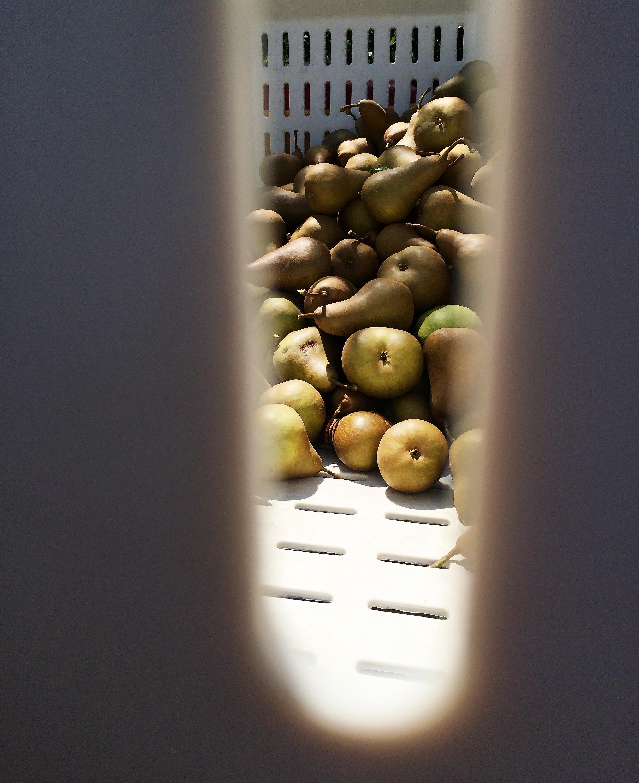 paleo-paparazzi-california-pears-peek-through-crate